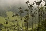 Туристы узнают историю открытия восковой пальмы. // Wikipedia