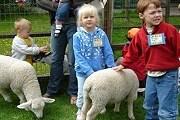 На ферме можно пообщаться с животными. // stay.com