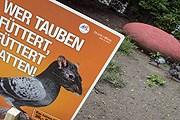 Власти Вены борются с засильем голубей. // Houdek / PID