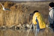 Наблюдение за птицами - популярное у туристов занятие. // iStockphoto