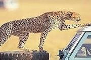 Парки Кении стали намного доступнее. // inter-travel.com