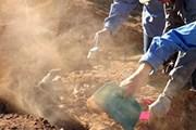 На территории Шестаковского комплекса найдены останки динозавров. //  EPA / Outback Gondwana Foundation