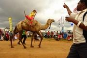 Верблюжьи скачки - развлечение для всех. // Magical Kenya