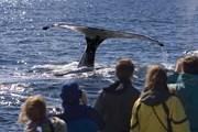 К китам можно подплыть очень близко.  // Sam Chadwick, Shutterstock.com
