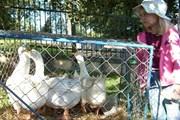 В программе - мероприятия для всей семьи.  // husi-slavnosti.cz