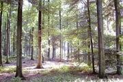 Суаньский лес // Wikipedia.org