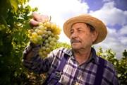 Испанские виноделы ждут туристов.  // StockLite, Shutterstock.com