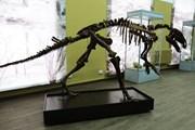 В музее - богатая коллекция останков динозавров.  // kuzbasskray.ru