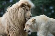 Африка ждет любителей природы.  // kochanowski, Shutterstock.com