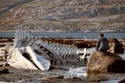 """""""Левиафан"""" показывает живописные пейзажи Кольского полуострова."""