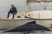 Неудачная встреча произошла у берегов Редондо-Бич в США.  // esmith_images, Instagram