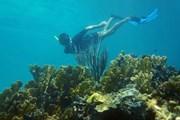 Косумель привлекает любителей подводного мира.  // Vilainecrevette, Shutterstock.com
