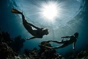 Хорватия ждет любителей подводных пейзажей.  // Dudarev Mikhail, Shutterstock.com