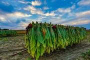 Посещение плантаций совмещается с активным отдыхом.  // hutch photography, Shutterstock.com