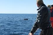 Норвегия приглашает на встречу с китами.  // whalesafari.no