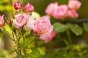В числе мероприятий - Фестиваль цветов.  // KonstantinChristian, Shutterstock.com