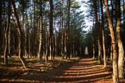 Парку угрожают пожары.  // Kalinina Alisa, Shutterstock.com