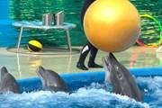 Гостям расскажут о работе с дельфинами. // Travel.ru