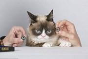Grumpy Cat - первое животное в Музее мадам Тюссо. // Madam Tussauds Museum