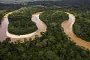 Перу спасает джунгли Амазонки. // redaccion.lamula.pe