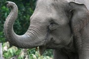 Зоозащитники борются за права слонов. // worldwildlife.org