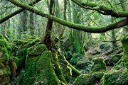 Английский лес находится на планете Эндор. // Alamy