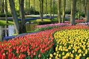 В парке Кёкенхоф - 7 миллионов цветов. // Офис Нидерландов по туризму