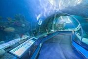 Подводный тоннель океанариума. // primocean.ru
