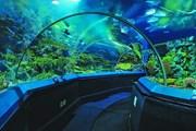 """Океанариум обещает стать крупнейшим в столичном регионе. // Страница океанариума в """"Крокус Сити"""" Вконтакте."""