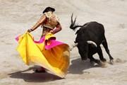 Каталонцы - против жестокого обращения с животными. // keyword-suggestions.com