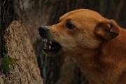 Незнакомые собаки - источник повышенной опасности. // trebuchet-magazine.com
