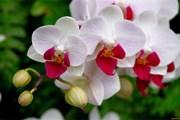 В планах создателей музея - собрать 10 тысяч орхидей.