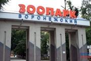 Зоопарк сформирует новую коллекцию птиц. // novostivoronezha.ru