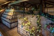 Мультимедийный музей расскажет все о производстве тосканских вин. // TGregione.it