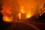 Португалия охвачена природными пожарами. // thesun.co.uk