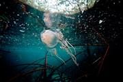 Встреча с медузой может обернуться гибелью купальщика. // Дэвид Доубилет, National Geographic