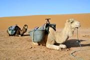Проблемы с безопасностью в Египте сохраняются. // eAlisa, shutterstock