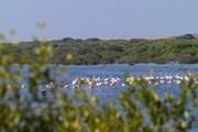 В заповеднике живут розовые фламинго. // Al Zorah
