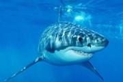 Квадрокоптеры увидят акул издалека. // australianherald.com
