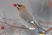 В регионе развивают экотуризм. // audubon.org