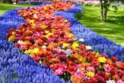 Кёкенхоф - известнейший сад мира. // dutchgrown.com