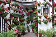 Патио, украшенные цветами, привлекают множество туристов. // cordoba24.info