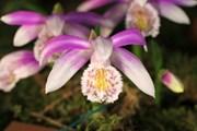 Открытие музея намечено на 18 мая. // orchids-museum.ru