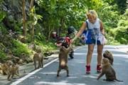 Длиннохвостые макаки терроризируют туристов. // YouTube