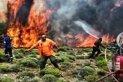 Огонь подобрался к Афинам. // news.sky.com