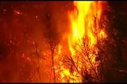 В Португалии горят леса. // euronews.com