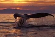 Брачный период китов притягивает туристов. // Министерство туризма Доминиканской Республики