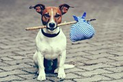 Перевозить животных в самолете стало проще // luggage.co.nz